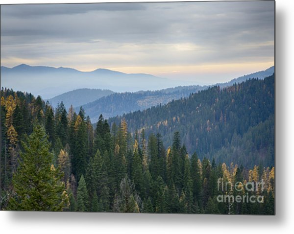 Green And Gold Forest Metal Print