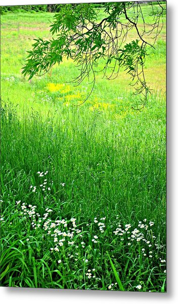Green Metal Print by Beverly Hammond