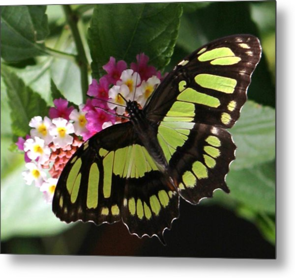 Green Butterfly With Flowers Metal Print