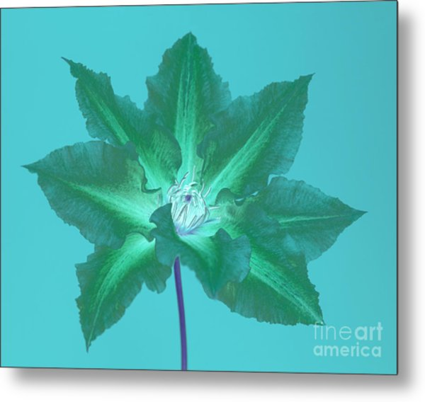 Green Clematis On Turquoise Metal Print by Rosemary Calvert