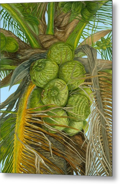 Green Coconut Metal Print