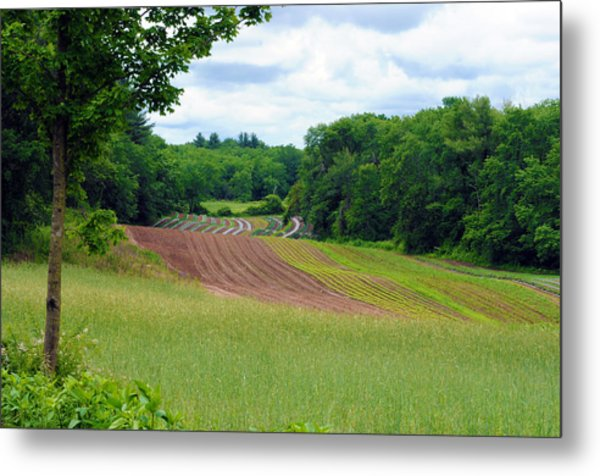 Green Crops Metal Print by Kenneth Feliciano