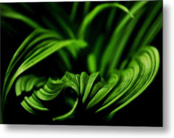 Green Curves Metal Print by Mary Anne Williams