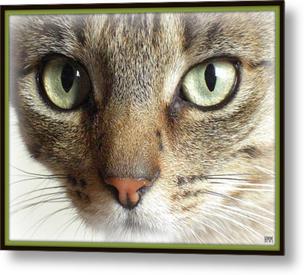 Green Eyed Cat Face Metal Print