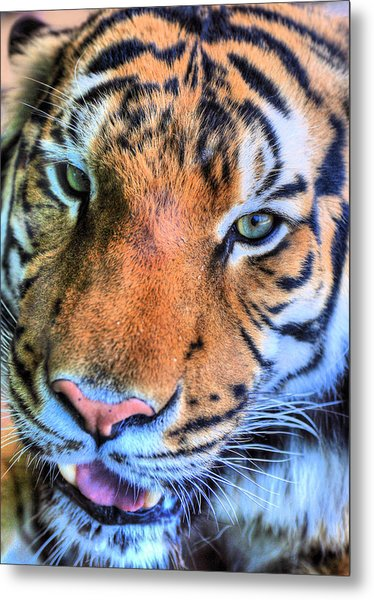 Green Eyed Redhead Metal Print by JC Findley
