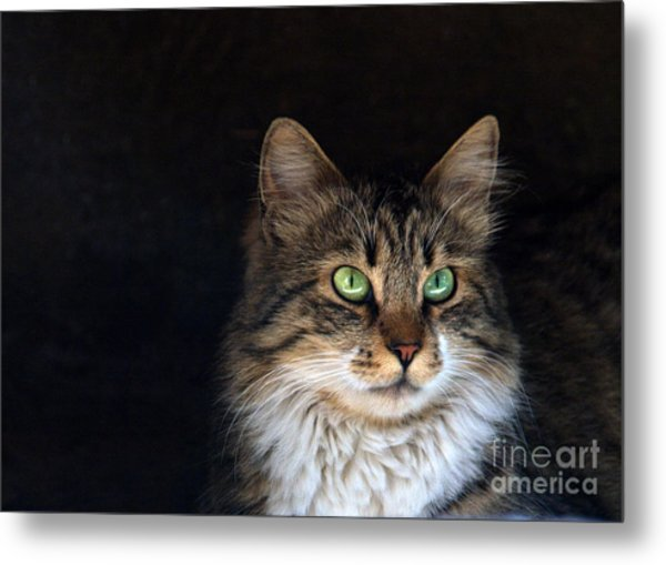 Green Eyes Metal Print