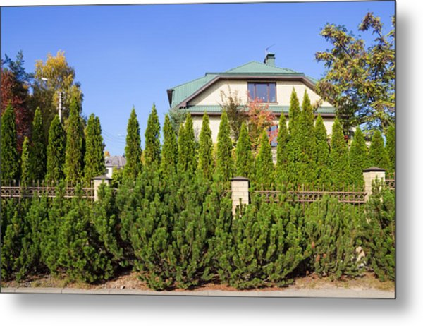 Green Fence Of Trees And Shrubs Metal Print by Aleksandr Volkov
