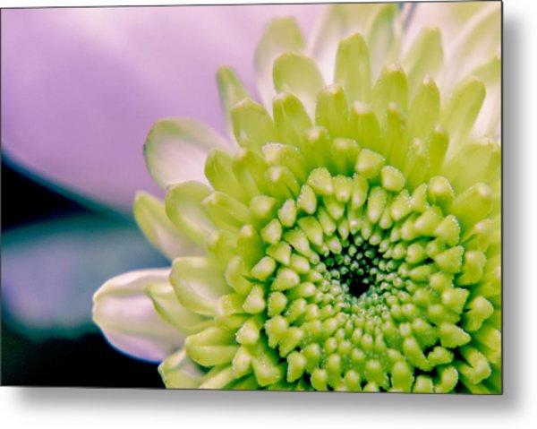 Green Flower2 Metal Print by Amr Miqdadi