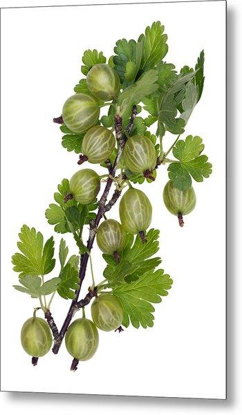 Green Forest Berries Metal Print by Aleksandr Volkov