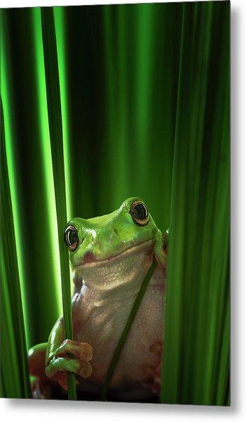 Green Frog Metal Print