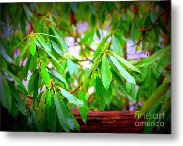 Green Glory Metal Print