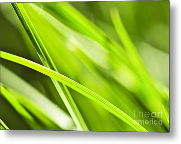 Green Grass Abstract Metal Print