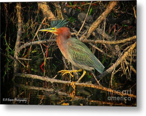 Green Heron Basking In Sunlight Metal Print
