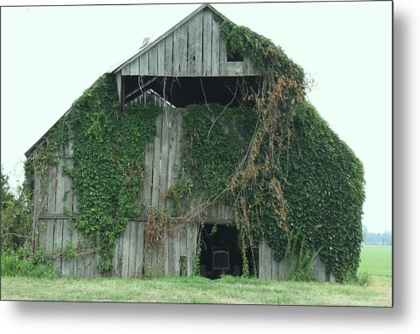 Green Ivy Barn Metal Print by Terry Scrivner