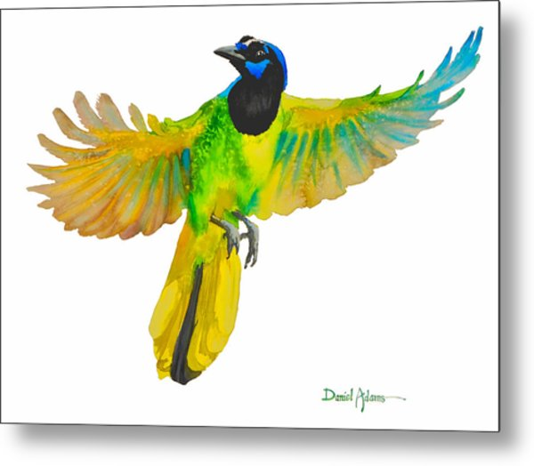 Da175 Green Jay By Daniel Adams Metal Print