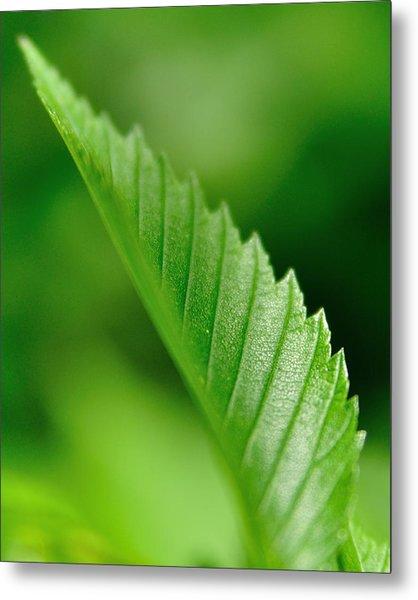 Green Leaf 002 Metal Print