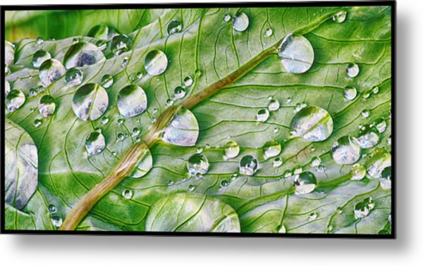 Green Leaf And Rain Drops Metal Print