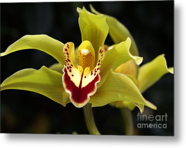 Green Orchid Flower Metal Print