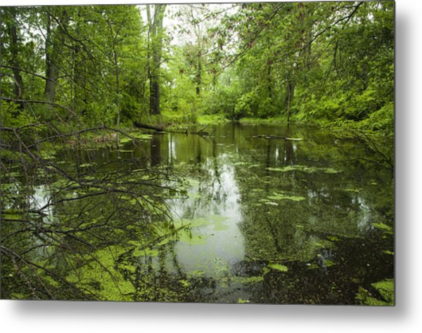Green Blossoms On Pond Metal Print