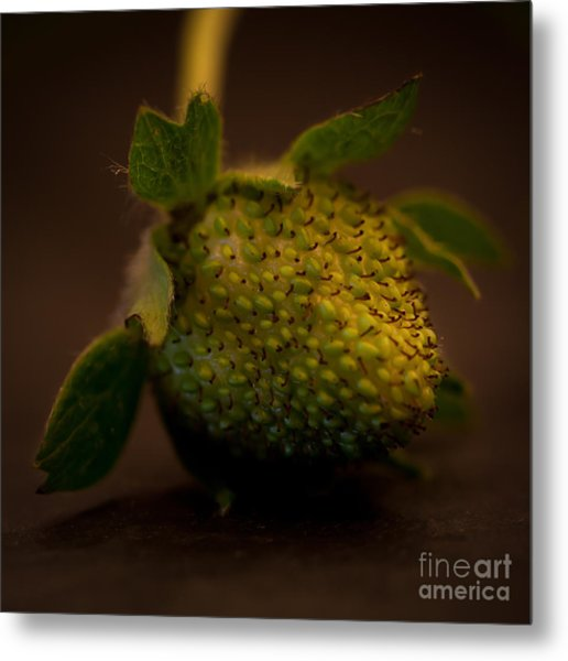 Green Strawberry Square Metal Print by Patricia Bainter