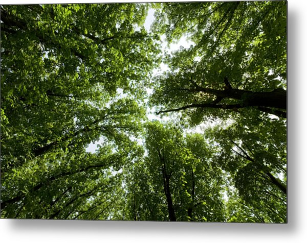 Green Summer Trees Metal Print by Ioan Panaite