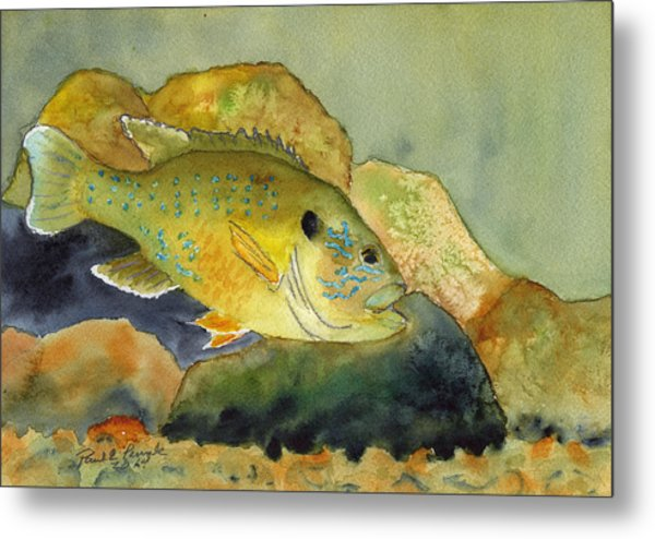 Green Sunfish Metal Print by Paul Temple