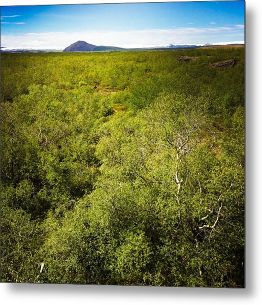 Green Trees In Iceland Metal Print