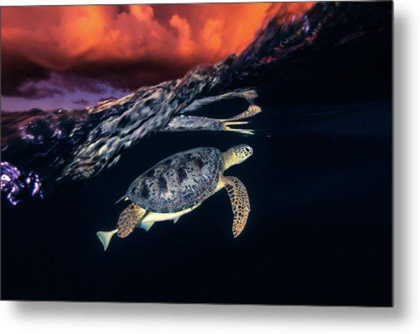 Green Turtle And Sunset - Sea Turtle Metal Print