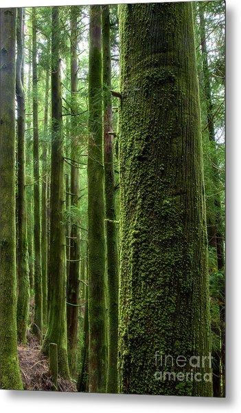 Green Wood Metal Print