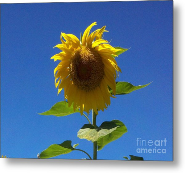 Sunflower With Open Arms Metal Print