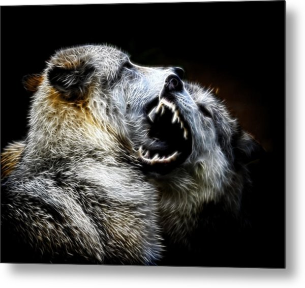 Grey Wolf Fight Metal Print