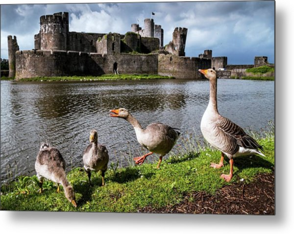 Greylag Geese And Caerphilly Castle Metal Print