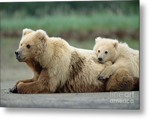 Grizzly Mother And Son Metal Print