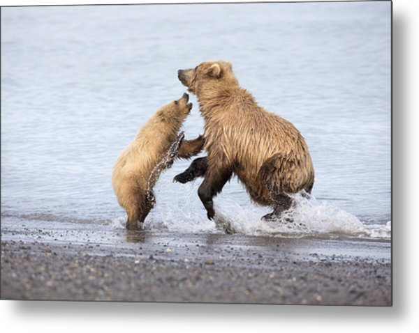 Grizzly Bear Mother Playing Metal Print