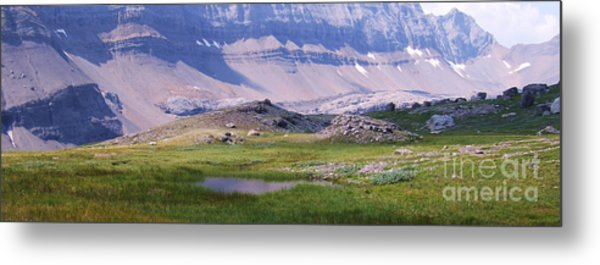 Grizzly Meadows Metal Print