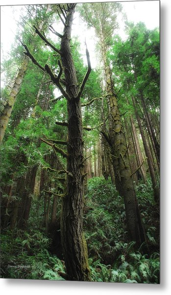 Groovin With The Redwoods Metal Print