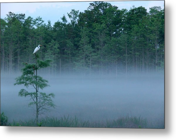 Grounded Egret Metal Print