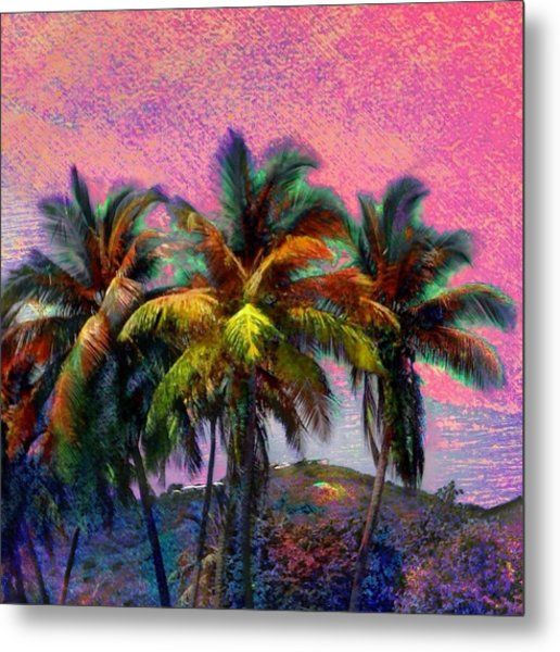 Grove Of Coconut Trees - Square Metal Print