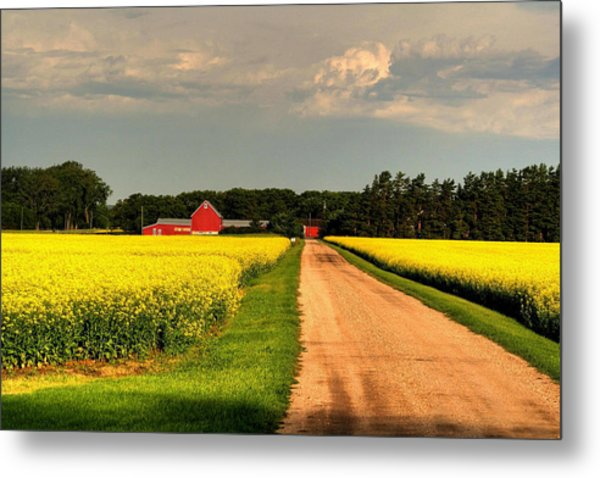 Growing For Gold Metal Print