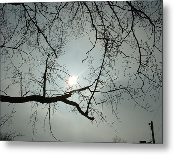 Grown In Cold Light Metal Print