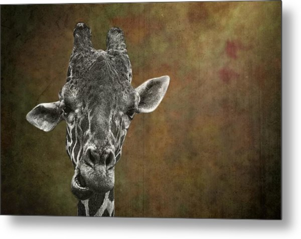 Grungy Giraffe 5654 Brown Metal Print