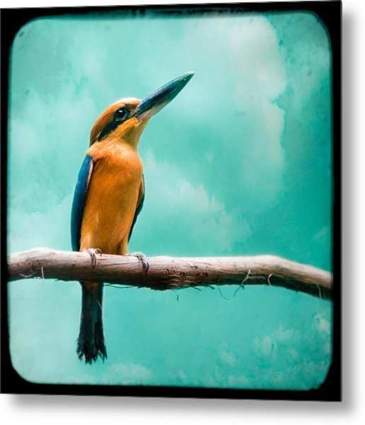 Metal Print featuring the photograph Guam Kingfisher - Exotic Birds by Gary Heller