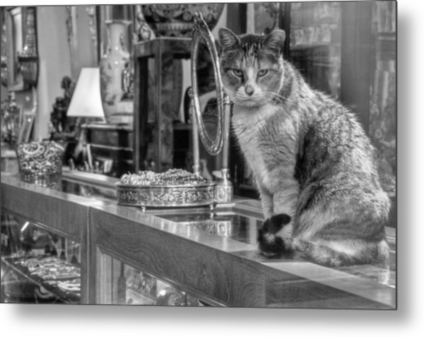 Guard Cat Metal Print
