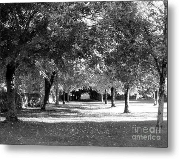 Guarded Pathway Metal Print