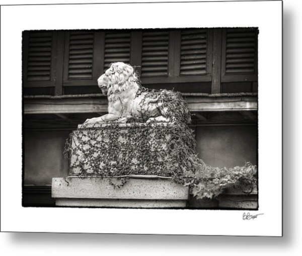 Guardian In Black And White Metal Print by Brenda Bryant