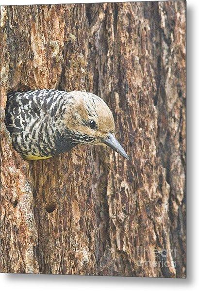 Guarding The Nest Metal Print by Bob Dowling