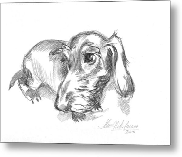 Guilty-looking Young Wire-haired Dachshund Metal Print