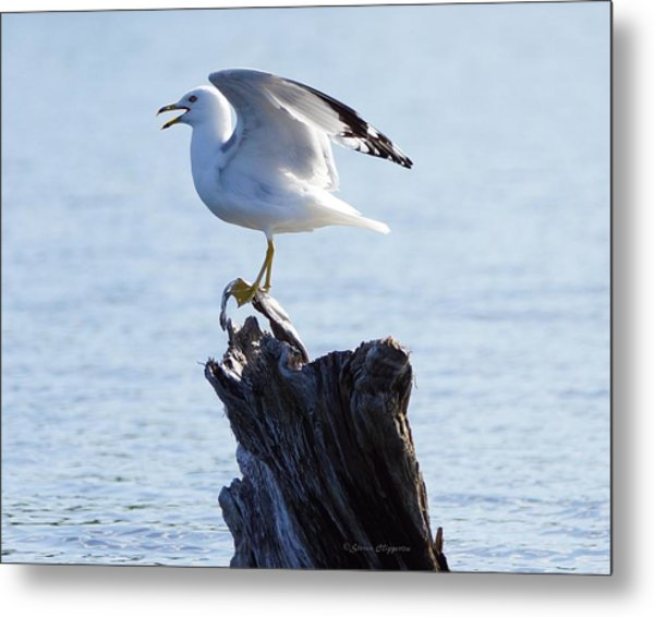 Gull - Able Metal Print