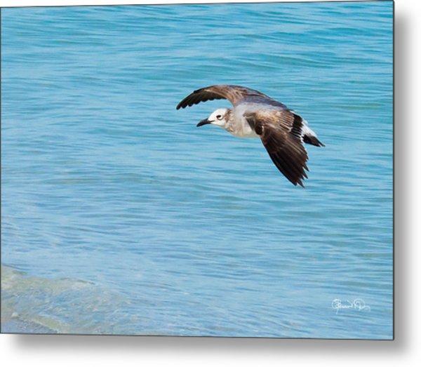 Gull At Lido Beach IIi Metal Print
