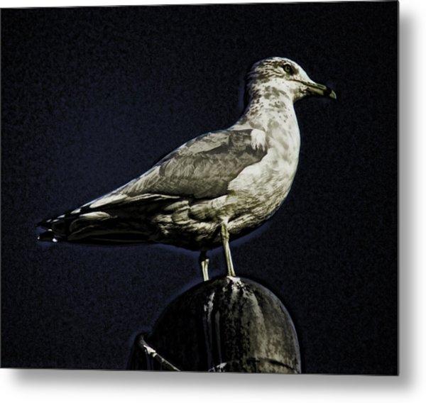Gull At Sundown Metal Print by Joe Bledsoe
